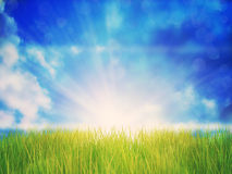 Sunny Grass Field. Fresh green grass field under blue sky with sun rays Royalty Free Stock Photos