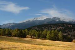Sunny Grass Field med sörjer träd och ett snö täckt berg Arkivfoton