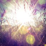 Sunny Grass. Grass in light and bokeh Royalty Free Stock Images