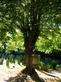 Sunny graveyard with large tree in summer Stock Image