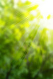 Sunny green backgroud Royalty Free Stock Photography