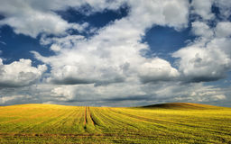Sunny green cultivated field in spring Stock Photos