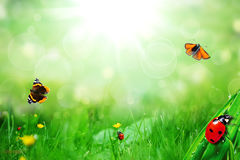 ladybugs and butterfly Royalty Free Stock Photos