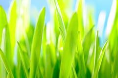 Sunny green grass macro Stock Image