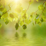 Sunny green leaves Stock Photo
