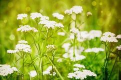 Sunny Green Meadow Foto de archivo libre de regalías