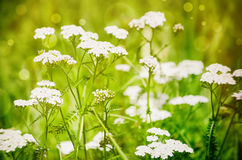 Sunny Green Meadow Royalty Free Stock Photo