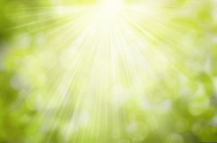 Sunny Green nature background, selective focus Royalty Free Stock Images