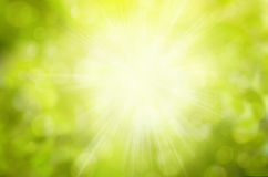 Sunny Green nature background, selective focus Stock Photography