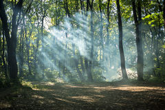 Sunny green paradise Royalty Free Stock Image
