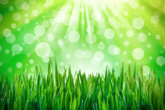Sunny green spring time Stock Photography