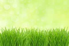 Sunny highlight and green grass Stock Photography