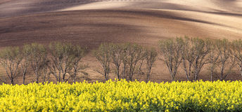 Sunny hills with fields, trees and rapeseed flowers. Suitable for wallpapers or backgrounds, natural seasonal landscape. Southern Moravia, Czech republic Royalty Free Stock Images