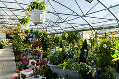 Sunny hothouse in a little farm of plants Royalty Free Stock Photo