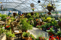 Sunny hothouse in a little farm of plants Stock Photography