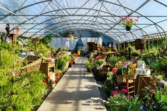 Sunny hothouse in a little farm of plants Stock Images