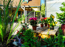 Sunny hothouse in a little farm of plants Stock Photo