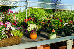 Sunny hothouse in a little farm of plants Stock Image