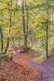 Colorful autumn forest Stock Image
