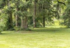 Idyllic park scenery Stock Images