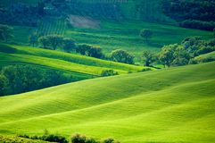 Sunny Italian fields Royalty Free Stock Image