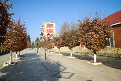 Sunny January Day in the city street. Lankaran, Azerbaijan. Sunny January Day in the city street. Lankaran. Azerbaijan Stock Images