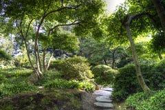 Sunny japanese garden in summer Stock Photography