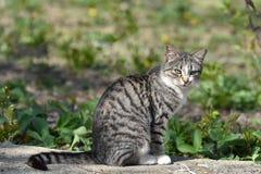 Sunny Kitten!. Kitten sitting in the sun, lovely kitten royalty free stock images