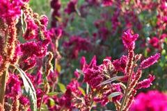 sunny kwiat Zdjęcia Stock