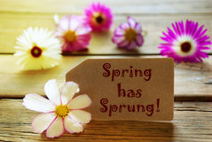 Sunny Label With Text Spring Has Sprung With Cosmea Blossoms. Brown Label With Sunny Yellow Effect With English Text Spring Has Sprung With Purple And White Stock Image