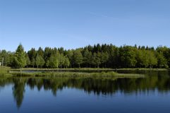 Sunny Lake with Trees Reflecting royalty free stock images