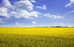 Sunny landscape Stock Image