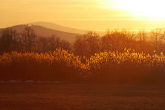Sunny landscape stock photos