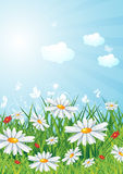 Sunny landscape. Sunny lanscape with flowers, eps10 vector illustration Royalty Free Stock Photos