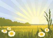 Sunny landscape. Summer sunny landscape with flowers. Canicular sun day Stock Photo
