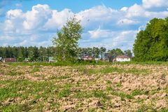 Sunny landscape of the countryside in the beginning of summer. A tractor plows the field. Flocks of birds follow directly behind a tractor, plowing the field Stock Photography