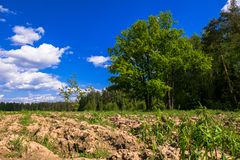 Sunny landscape of the countryside in the beginning of summer. stock photography