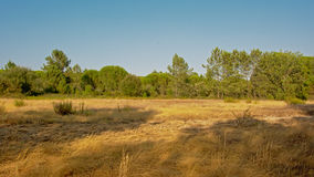 Sunny landscape with dry grassland and pine trees, Portalegre, Portugal. Dry grassland and pine tree forest on the coast of  `Baragem de  Montargil`  lake near Royalty Free Stock Photography