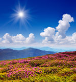 Blooming mountain valleys Stock Image
