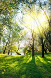 Sunny landscape with forest Royalty Free Stock Photos