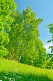 Sunny landscape in the forest. stock image
