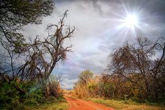 Sunny landscape. Scene within colorful trees and a sand road Royalty Free Stock Image
