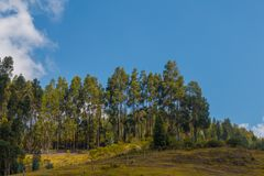 Sunny landscape with trees and clouds royalty free stock images