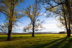 Sunny landscape of ural meadow royalty free stock images