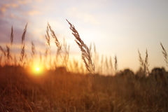 sunny landscape view Royalty Free Stock Image