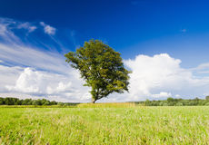 Sunny Landscape Royalty Free Stock Photography
