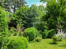Sunny landscaped garden with evergreens and blooming bushes. Many boxwood Buxus sempervirens and pines. Pinus parviflora royalty free stock image