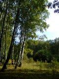 sunny las Obrazy Royalty Free