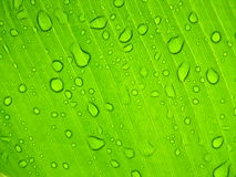 Sunny leaf with drops. Raindrops on a leaf under the sun royalty free stock image