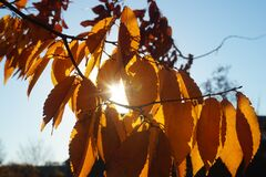 Sunny Leaves Royalty Free Stock Images